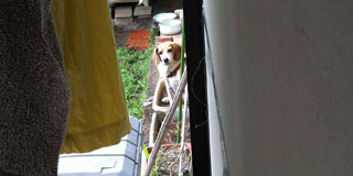 うちの犬可愛過ぎワロタwwwww