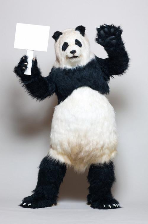 news_large_panda