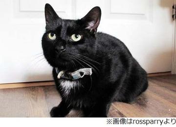 【イギリス】猫が隣家窓叩き助け求める、飼い主が薬の影響で倒れピンチに
