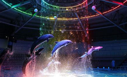 『アクアパーク品川』、期間限定でそれぞれの個性あふれる魚達の特徴を人気声優陣がイケボでセリフをつける企画展示『イケ魚パラダイス』開催wwwwwww