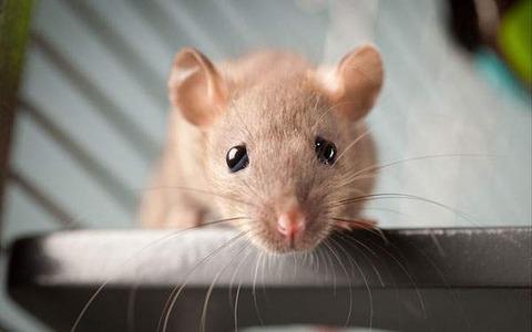 ホームセンターに売り物のネズミが逃げ出したと思って捕まえた結果wwwwwwwwwww