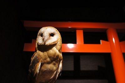 「神社」をイメージした世界一キレイに写真が撮れる「ふくろうカフェ」が浅草にオープン!