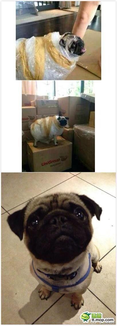 オークションで犬を買ったら凄まじい状態で送られてきたwwwwwwwwwww