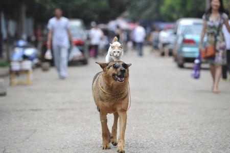 【動物】猫を背中に乗せ散歩する犬が話題に【写真】