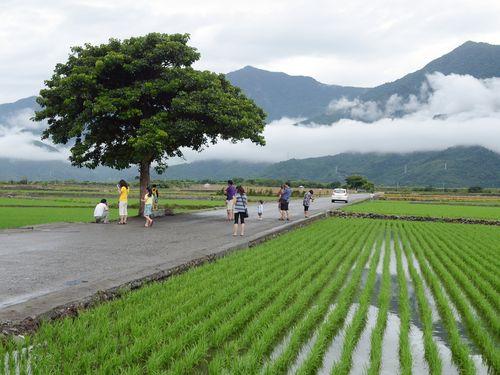 【台湾】「金城武の木」ブームに地元農民カンカン 観光客がゴミのポイ捨てやでたらめな駐車