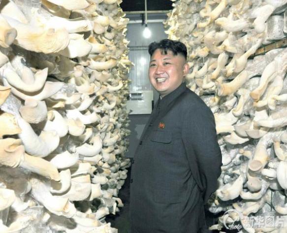 【北朝鮮】「遺訓実現で北をキノコの国に」金正恩第一書記、栽培工場視察で改めて指示