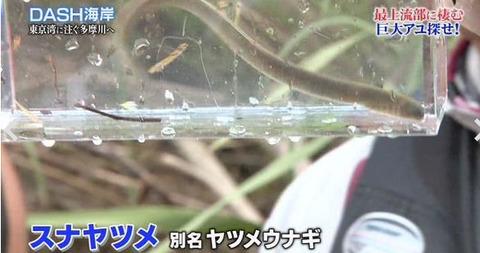 tokio 古代サメ捕獲 (2)