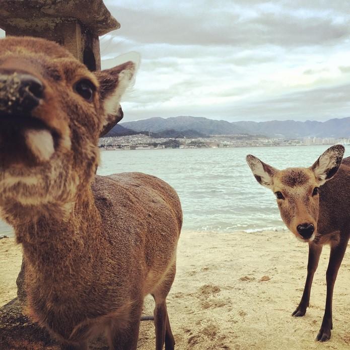 Ehime, fukouka, Hiroshima, Imabari, Itsukushima Shrine, Japan, Miyajima, Travel,