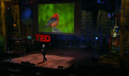 david byrne on ted