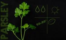 liveseasoned_spring2014_herbs-5