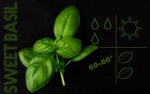 liveseasoned_spring2014_herbs-6