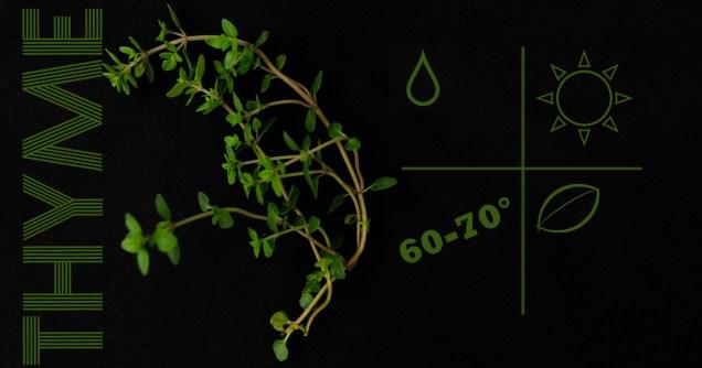 liveseasoned_spring2014_herbs-7
