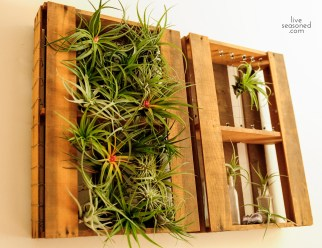 liveseasoned_summer14_airplants-1-3