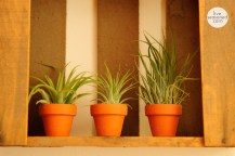 liveseasoned_summer14_airplants-2-2