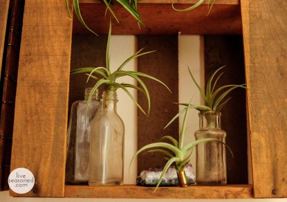 liveseasoned_summer14_airplants-3