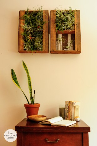 liveseasoned_summer14_airplants-5