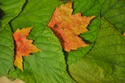 liveseasoned_fall14_leafgarland-16