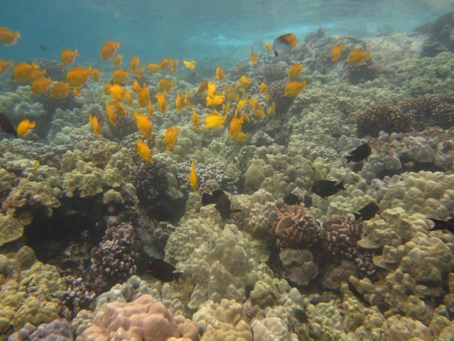Photo Friday: Snorkeling in Hawaii