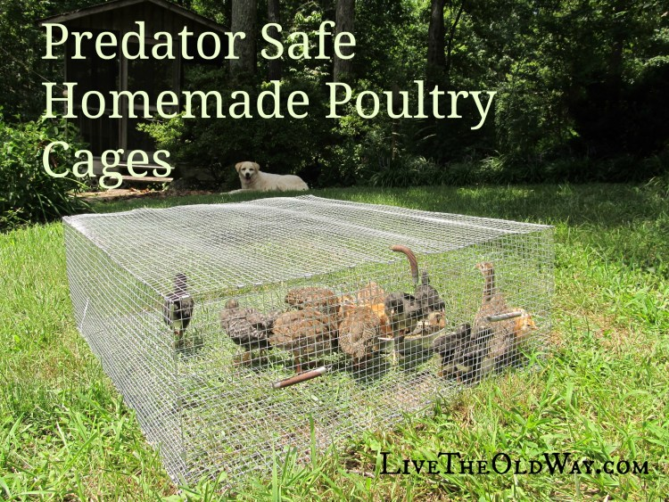 Predator proof cage pen