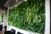 LiveWall Green Wall System | LiveWall Green Wall Enlivens ...