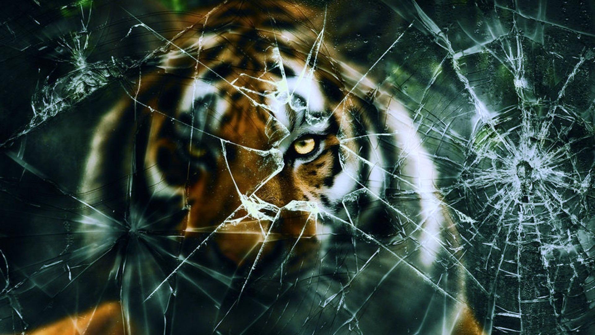Get Live Wallpaper For Iphone Tiger Broken Screen Wallpaper 2018 Wallpapers Hd