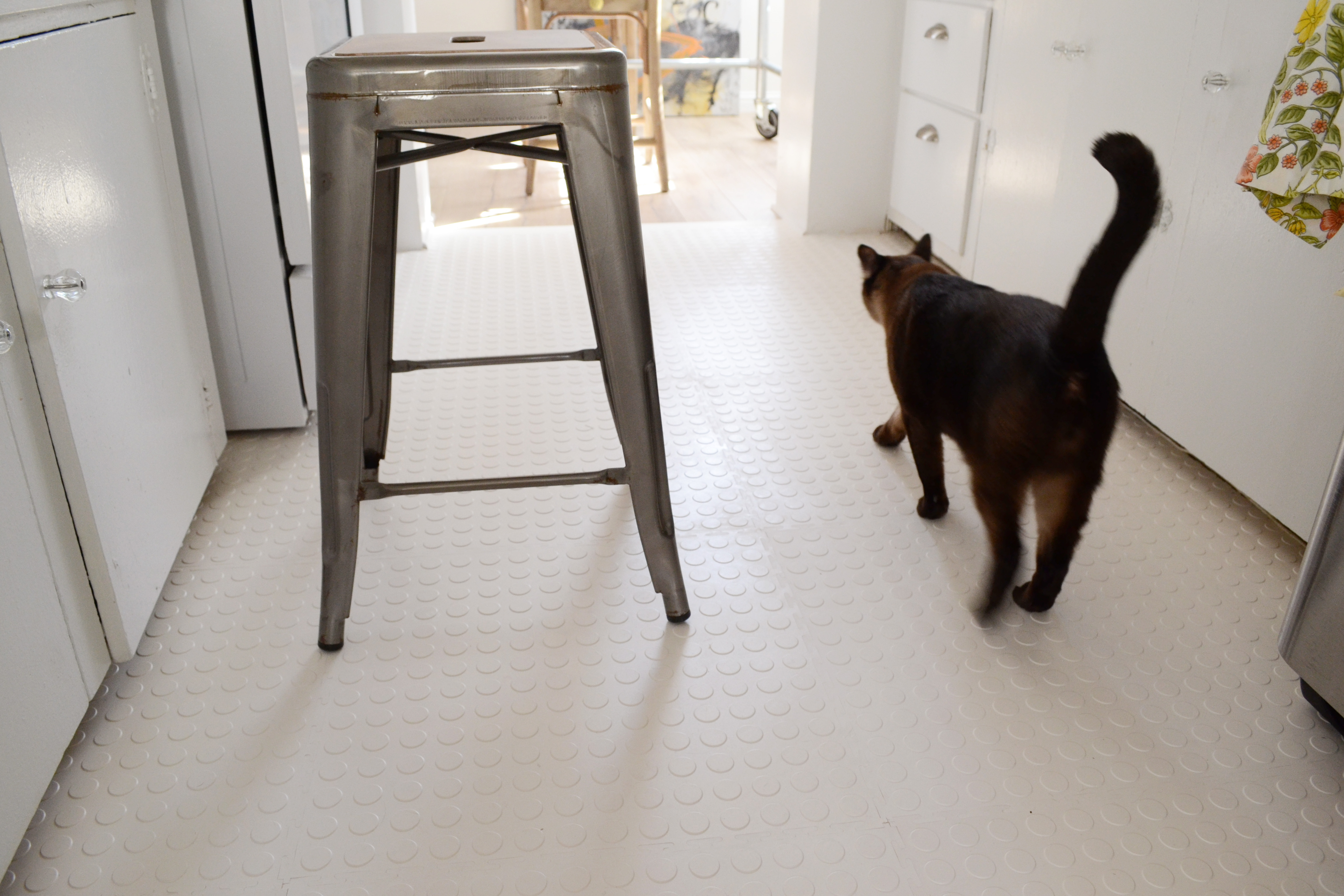kitchen flooring for kitchen Final Cat on Rubber Floor 1