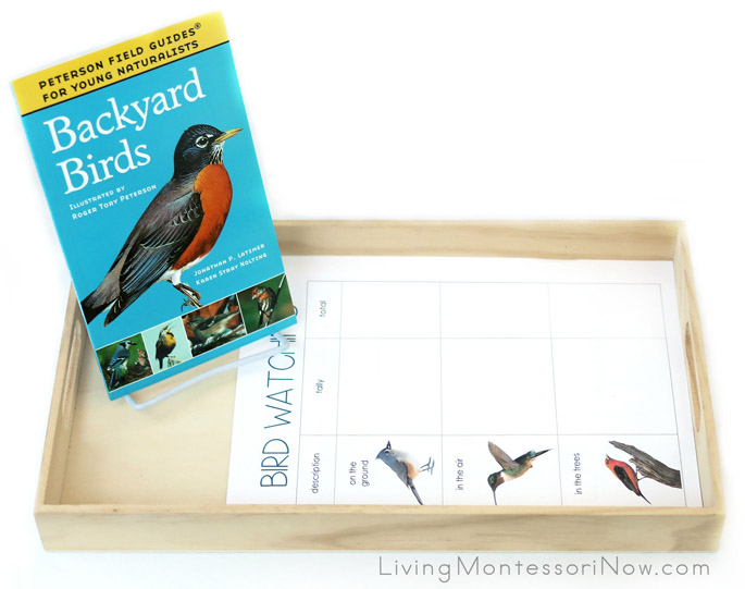 Free Backyard Bird Printables and Montessori-Inspired Backyard Bird