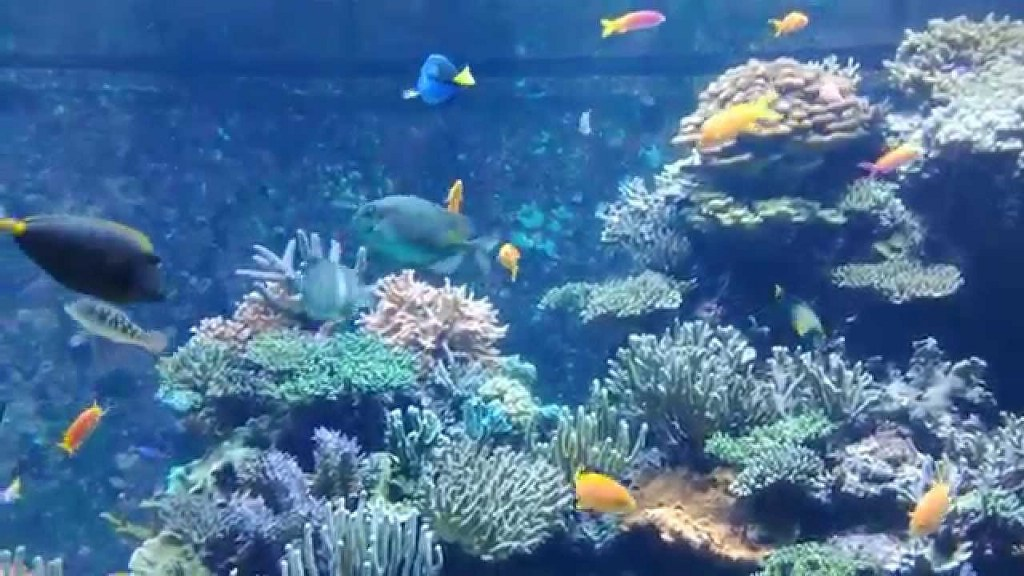 Fish Tank Wallpaper Hd Behold The Wonderful Ocean World At S E A Aquarium Singapore