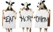 chickFilA-cows