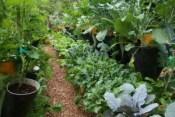 Vee Garden plants