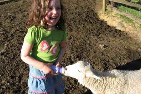 Cheap family vacation idea: Stay on a farm