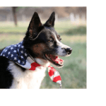 Free pet safety tips for July 4 and more