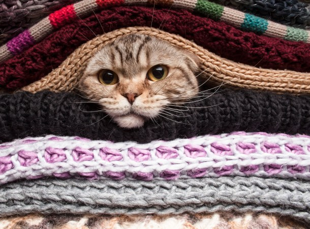 sweaters-with-cat