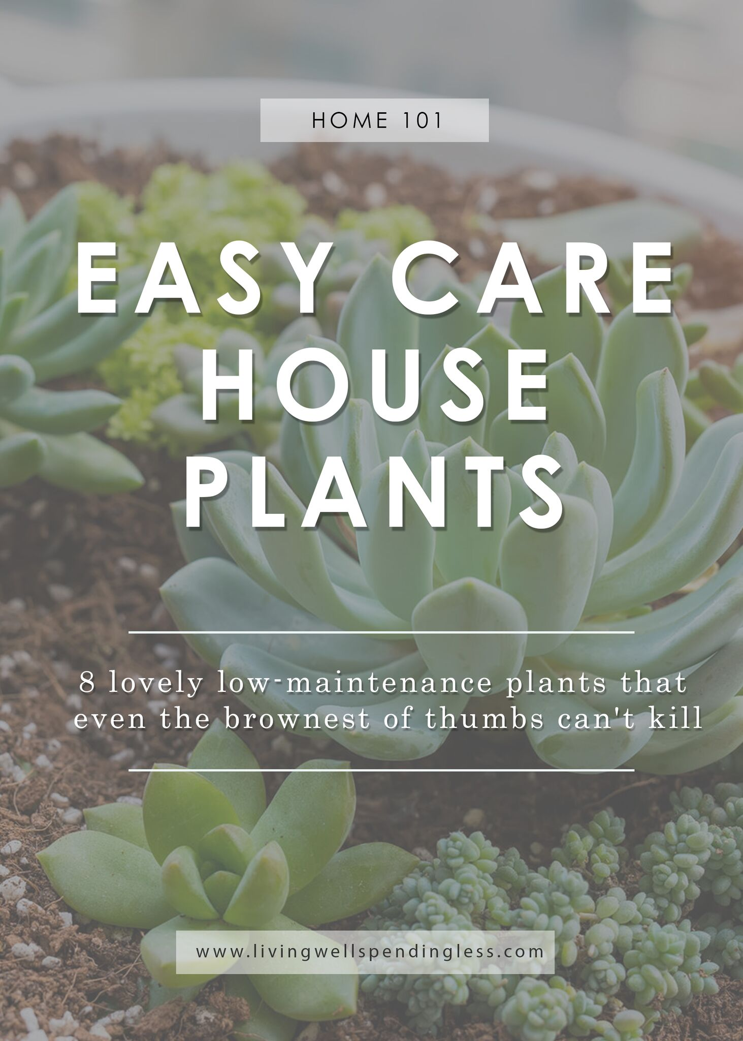 Easy To Care For Houseplants Low Maintenance Houseplants Easy Care House Plants