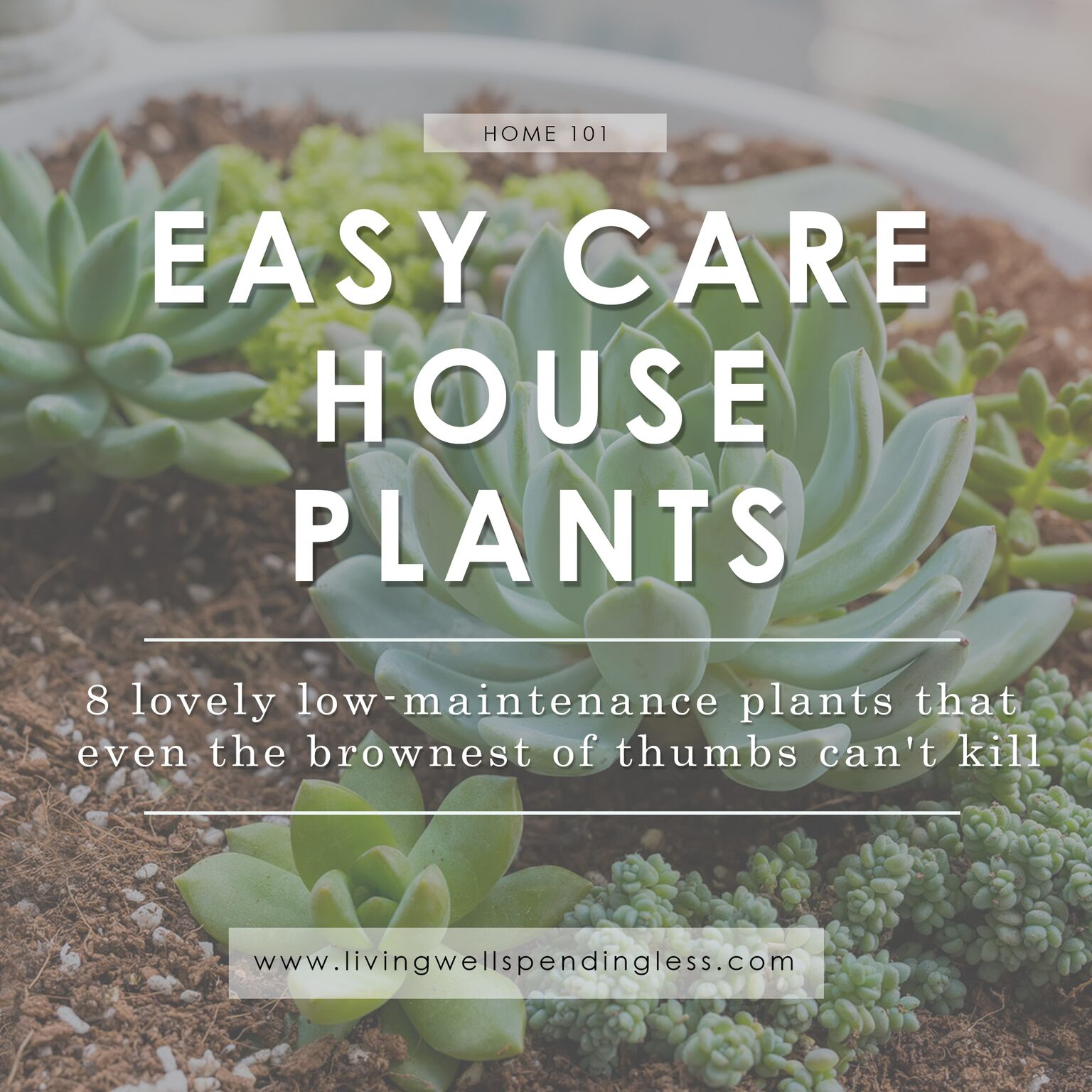 Easy Care Indoor Trees Low Maintenance Houseplants Easy Care House Plants