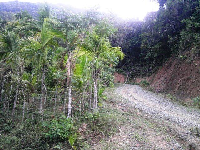 Jalan ke hutan Lange yang ditanami pohon pinang, cengkeh, durian, dan beragam spesies lainnya