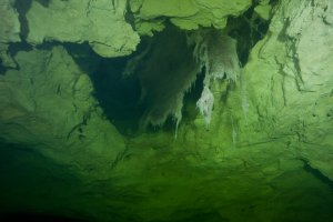 Hanging Roots in Olwolgin Cave