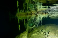 Olwolgin Cave Hanging Roots