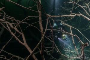 In the trees in Ela Elap