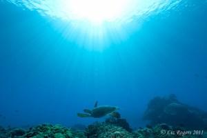 Turtles in sunlight at Layang Layang