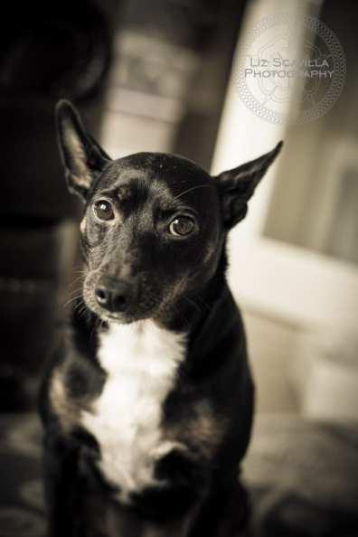Missy Dog Black & White