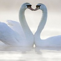 Happy Valentine's Day | Unusual Heart-Shaped Images