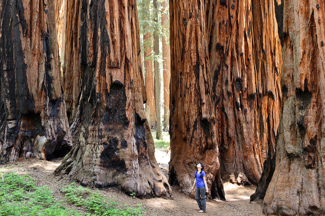 Portland Oregon Fall Had Wallpaper 15 Amazing Things To Do In Sequoia National Park Kings