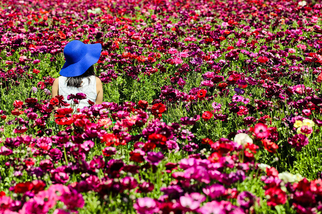 Beautiful California Flower Fields You Must Visit This Spring