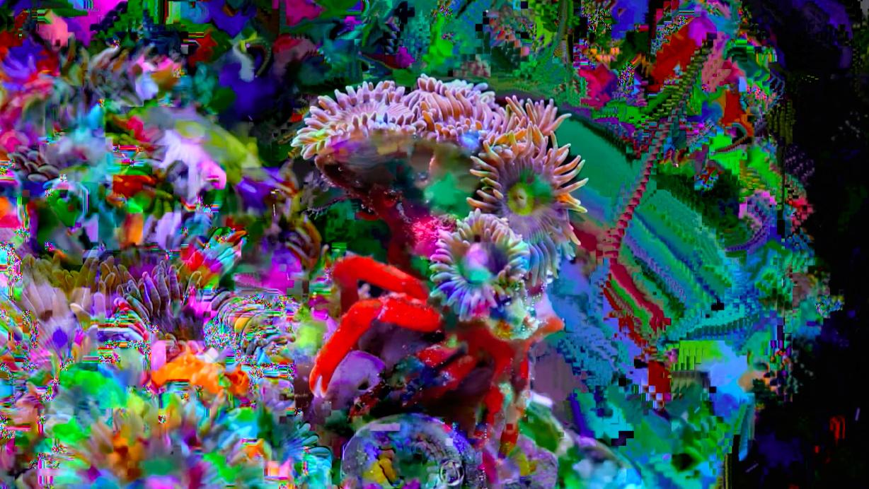 Scientific Wallpaper Hd Coral Morphologic Lodown Magazine