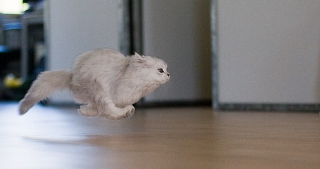 Cat So Fast, It Defies Gravity