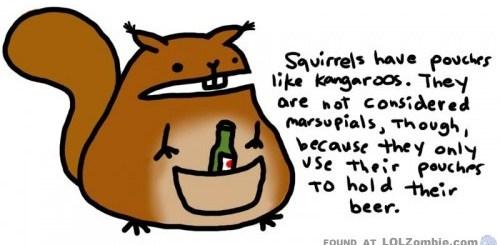 Squirrel Kangaroos