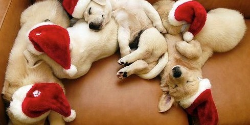 Sleeping Christmas Puppies