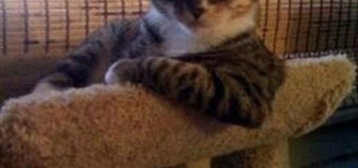 Loud Cat Meows