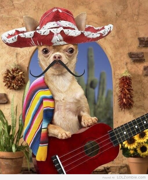 Cinco De Mayo Dog
